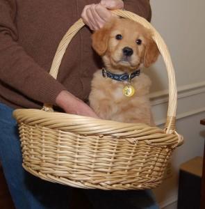 puppy-14685_640