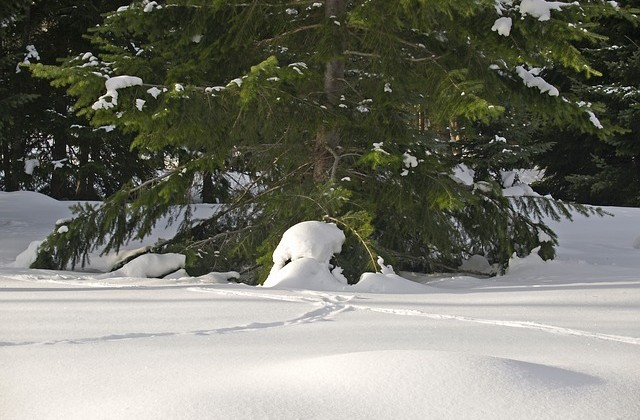 winter-75941_640