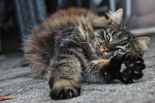 cat-596418_640