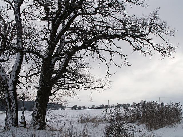 winter-583035_640
