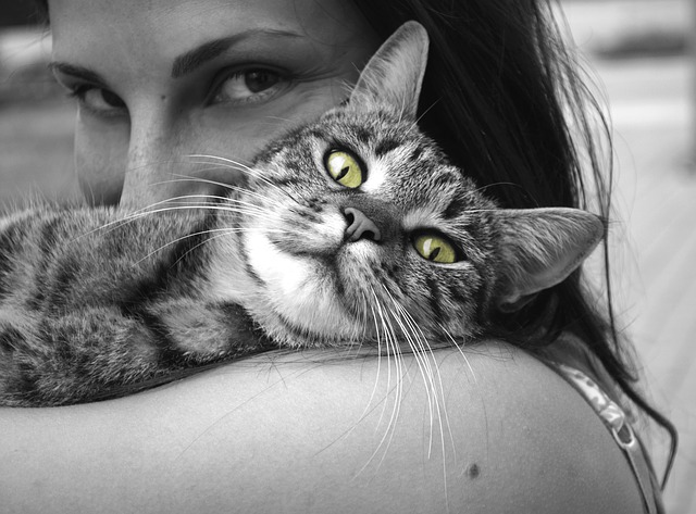 animals-617305_640