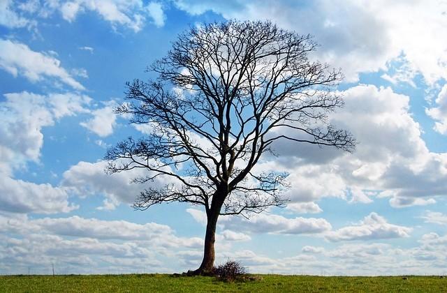 tree-164915_640