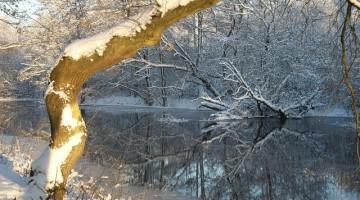 winter-74619_640