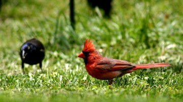 bird-226550_640