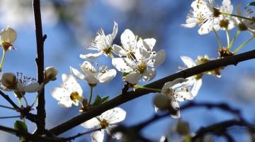 flowers-291902_640
