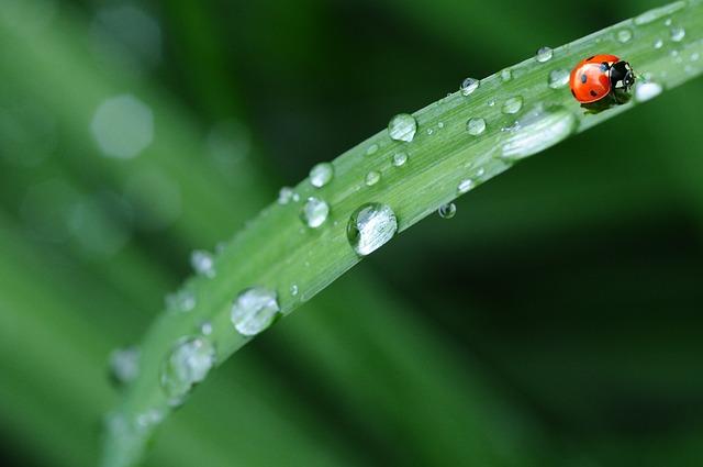 ladybug-574971_640