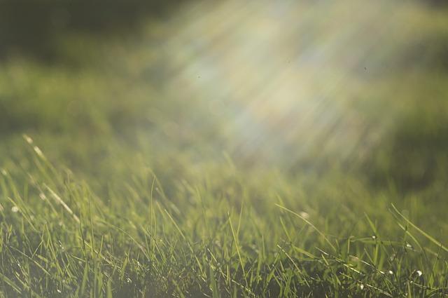 rays-of-the-sun-625869_640