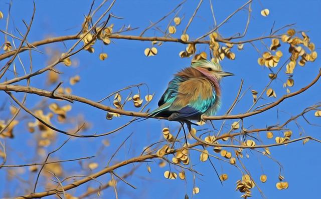 bird-515031_640
