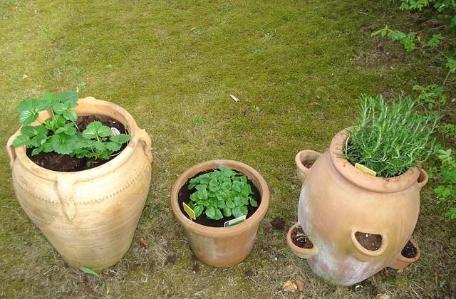 herbs-217447_640