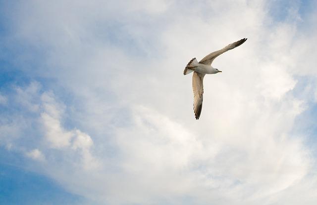 seagull-491658_640