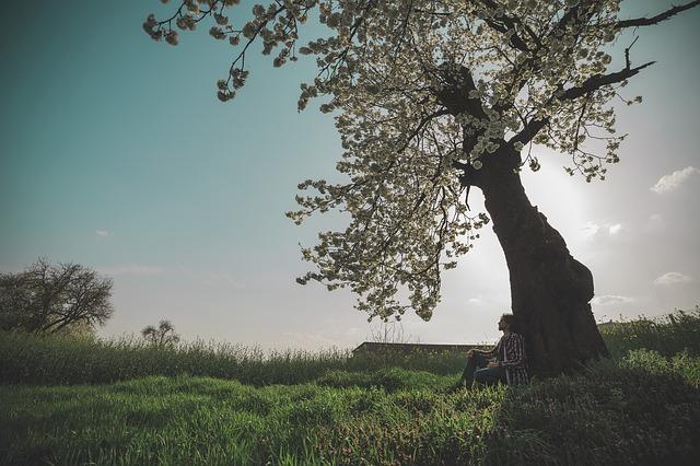 spring-604210_640