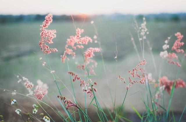 flowers-690425_640