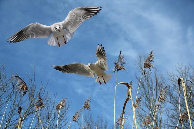 gulls-700067_640
