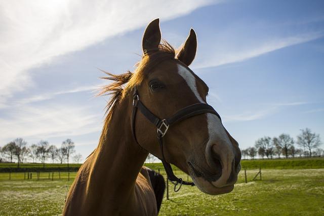 horse-742424_640