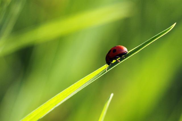 ladybug-702552_640