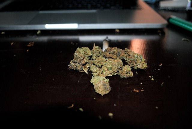 marijuana-505464_640 (1)