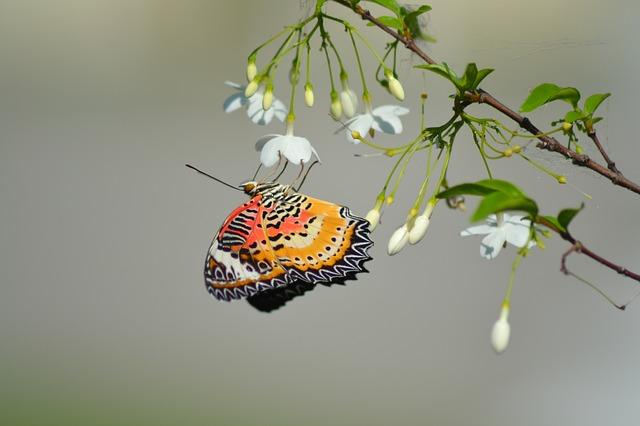 butterfly-789522_640