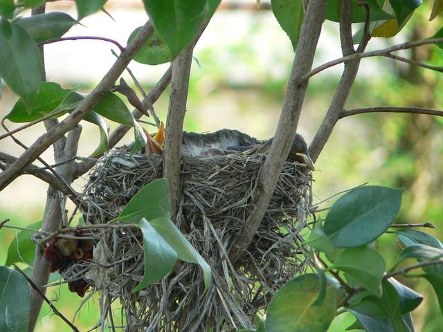 robins-nest-494009_640