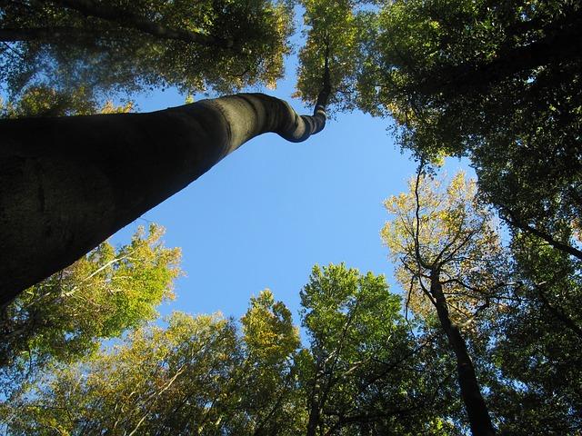 trees-84063_640