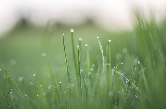 grass-839562_640