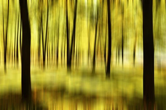 the-tree-335756_640