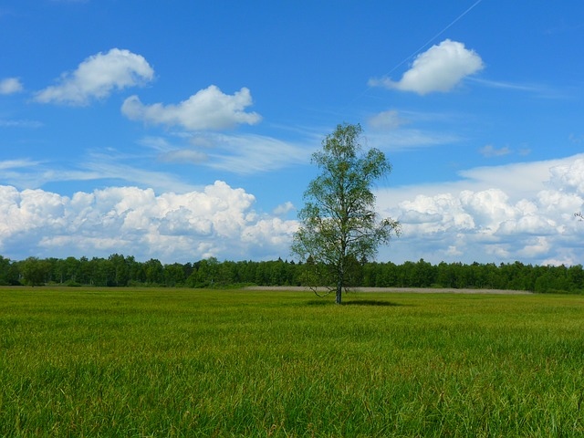 tree-7835_640