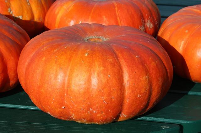 pumpkins-432607_640