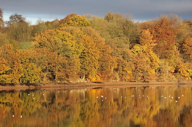 autumn-108737_640 (1)
