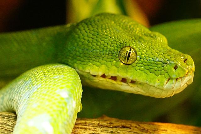 green-tree-python-942684_640