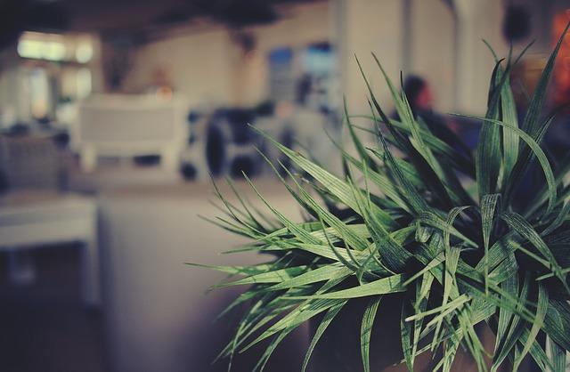 plant-698637_640
