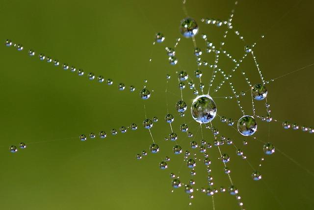 cobweb-1421178_640