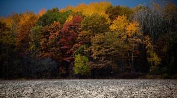 fall-1634893_640