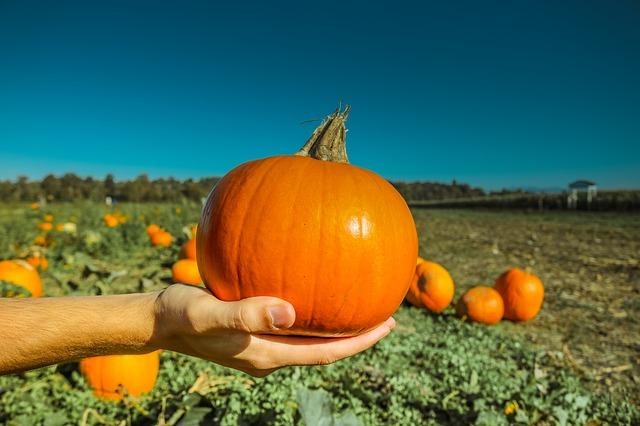 pumpkin-973238_640