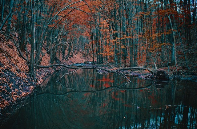 autumn-1842551_640
