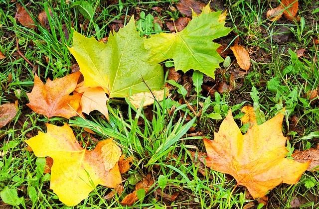 fall-foliage-1701594_640