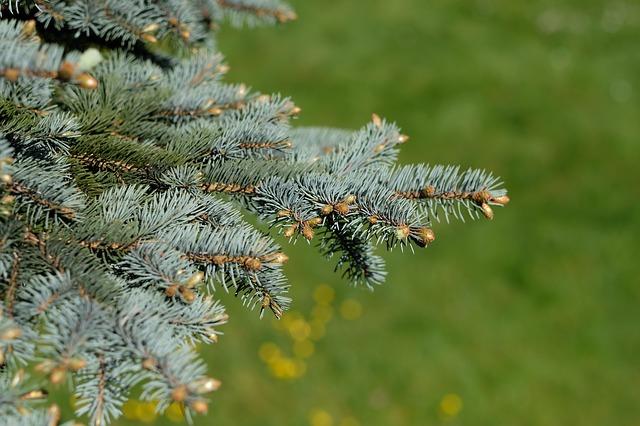 christmas-tree-1828527_640