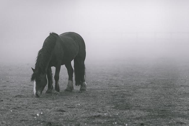 animal-1836115_640