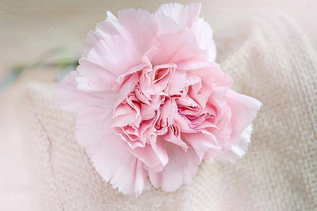 flower-1364071_640