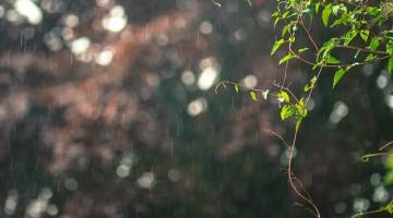 raining-2461158_640