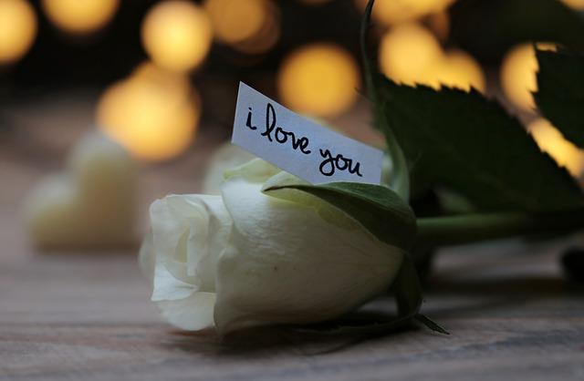 rose-3121235_640