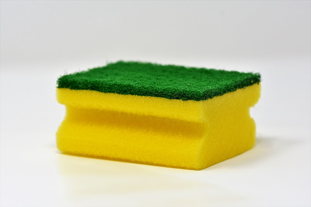 sponge-3081410_640