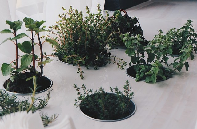 plants-789657_640