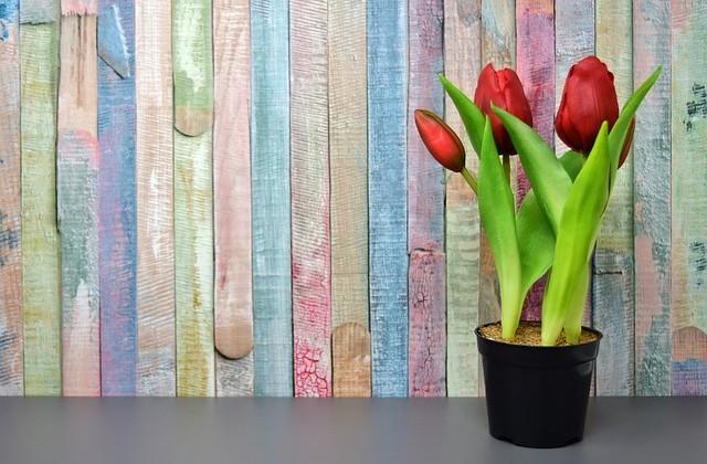tulips-3167464_640