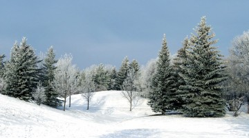 winter-2944419_640