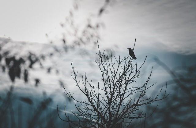 raven-4874366_640